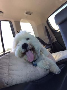 Where we going? Huh? Huh?  I'm so happy!
