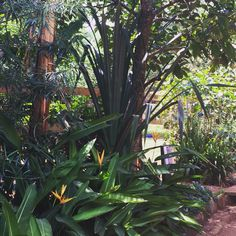 The tropical garden in Holland Park Resort.