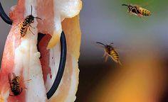 Flying Wasps