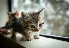 Munchkin cats?