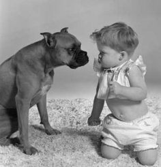 Boxers and Babies :)    Lol they look alike.