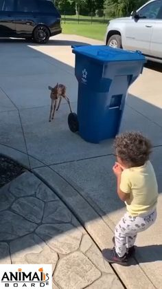 #baby #babykid #babydeer #deer #cutebaby #cute #adorable #funny Cute Funny Animals, Cute Baby Animals, Animals And Pets, Cute Dogs, Cute Babies, Wild Animals, Cute Animal Humor, Cute Animal Videos, Funny Animal Pictures