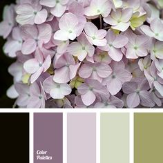 black color, color of greens, color of young greens, green and violet colors, green shades, jade color, light purple color, lime color