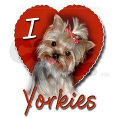 I  Yorkies