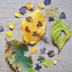 Just love this idea! How to make your own eco-friendly, recycled and biodegradable natural leaf wedding confetti from the leaves in your garden, woods, parkland etc. Wedding Send Off, Fall Wedding, Diy Wedding, Wedding Themes, Wedding Tips, Wedding Favors, Wedding Reception, Woodland Wedding, Wedding In Nature