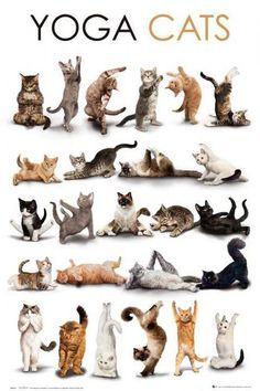 Yoga Cats !