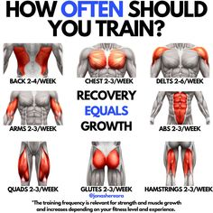 These are averages and your specific training frequency will vary depending on your fitness level and experience. These training frequencies are for strength and muscle growth. Gym Workout Chart, Full Body Workout Routine, Gym Workout Videos, Gym Workouts, Dumbbell Workout, Workout Plans, Butt Workout, Workout Challenge, Push Pull Workout