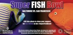 This year's Superbowl between the Baltimore Ravens and San Francisco is the backdrop for a brilliant batch of social media fundraising efforts by a several nonprofit organizations.