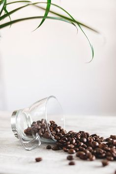 Discover our great selection of free coffee stock photos. Find pictures of coffee mugs, coffee beans, coffee cups, and more unique coffee images. Grinding Coffee Beans, Coffee Roasting, Coffee Photography, Food Photography, Best Coffee Grinder, Coffee Grinders, Decaf Coffee, Coffee Cup, Starbucks Coffee