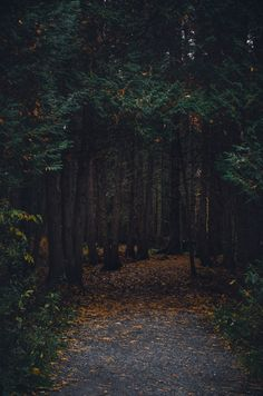 Tree, darkpath, path and tremblant HD photo by Caroline Ziemkiewicz (Caroline Ziem) on Unsplash Tree Nature Iphone Wallpaper, Forest Wallpaper, Apple Wallpaper, Locked Wallpaper, Screen Wallpaper, Landscape Photography, Nature Photography, Travel Photography, Nature Landscape