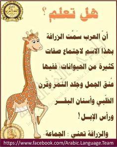 Broccoli Crust Pizza, Arabic Lessons, Arabic Language, Learning Arabic, High Five, Arabic Words, Knowledge, Arabic Calligraphy, Quotes