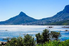 Lion's Head - photo cred: Marcelle Wortmann from Marcy's Moments Capture