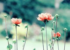flowers, nature, and pink Bild