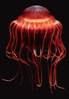 An Atolla wyvillei, also medusa, is a species of deep-sea crown jellyfish (Scyphozoa: Coronatae). It lives in oceans around the world. Under The Water, Life Under The Sea, Beautiful Sea Creatures, Deep Sea Creatures, Weird Creatures, Underwater Creatures, Underwater Life, Medusa, Sea Crown