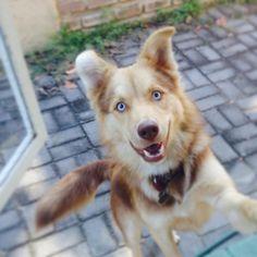 Beautiful, happy pup!