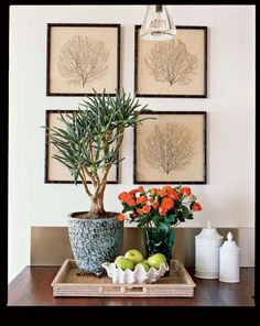 These aloe plants, mounted on luxurious linen and framed in sleek bamboo, offer just a hint of natur... - Photographer: Lisa Romerein