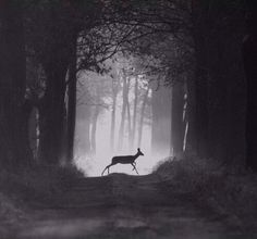 Lonely Deer In The Forest