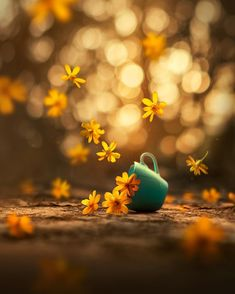 Whimsical and Dreamlike Still Life Photography by Ashraful Arefin Wunderliche und traumhafte Stillleben-Fotografie durch Ashraful Arefin Bokeh Photography, Still Life Photography, Photography Ideas, Flower Wallpaper, Nature Wallpaper, Flower Pictures, Nature Pictures, Beautiful Pictures, Imagen Natural