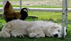 Sometimes they fall asleep on the job... ;)