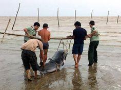 Делфини и китове масово се самоубиват - Първи Български Зоопортал