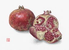 Asuka Hishiki Pomegranate  Punica granatum 7 1/2 x  9 1/2 Watercolor on paper