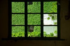 Houses are covered with creepers at a deserted village on Shengshan Island on May 31, 2015 in Zhoushan, China.