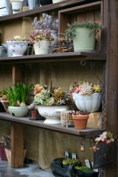 use different containers for plant pots