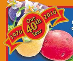 Organic Fingerling Seed Potatoes - Organic Certified Rose Finn Apple Seed