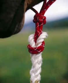 Attaching lead rope to halter w/o metal snaps