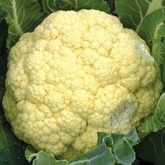 Amazing Cauliflower
