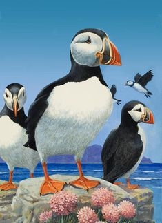 Puffins Painting  - Puffins Fine Art Print