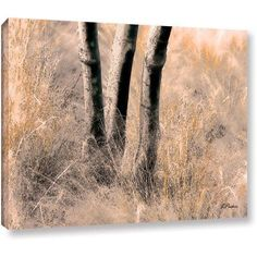 Linda Parker Desert Grasses II Gallery-Wrapped Canvas, Size: 24 x 32, White