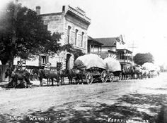 """Wool wagons in Kerrville, Texas. Mules, Horses and Wagons in Kerrville, Texas. By Hugh Hemphill, author of """"San Antonio On Wheels"""" and """"The Railroads of San Antonio and South Central Texas."""" Courtesy: The Texas Transportation Museum, San Antonio, Texas (USA)"""
