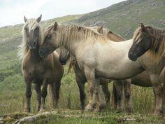 Wild Horses - Bathurst Inlet, Canada
