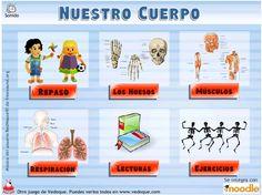 Nuestro cuerpo - en español (ciencia)