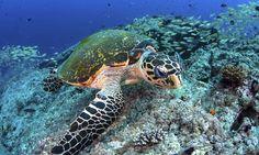 Protecting Ocean Species