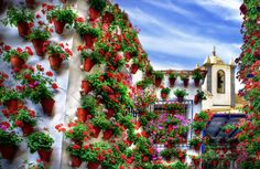 City of Flowers, Córdoba, Spain. - I don't think you could ask the neighbor to water while you were out of town :)