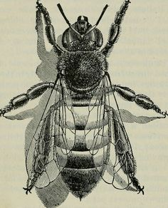 "Image from page 215 of ""The ABC of bee culture: a cyclopaedia of every thing pertaining to the care of the honey-bee; bees, honey, hives, implements, honey-plants, etc., facts gleaned from the experience of thousands of bee keepers all over our land, and"
