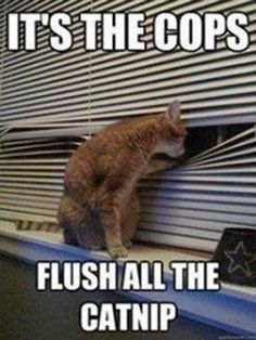 Fun Claw - Funny Cats, Funny Dogs, Funny Animals: Funny Cat Pictures - 21 Pics
