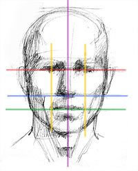 Diagram of head, and proportions.