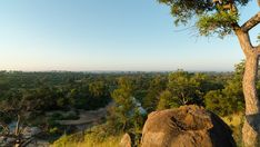 A linear timelapse at sunrise/daybreak/dawn with a granite rock boulder and Marula tree in a lush green landscape overlooking a riverbed. Kruger National Park, Green Landscape, Lush Green, Bouldering, Stock Footage, Granite, Dawn, Sunrise