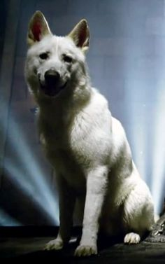 Ghost. Jon Snow's direwolf. He's supposed to be albino and is always silent.