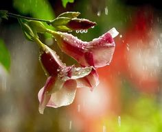 flor-hermosa-flowers.jpg (722×591)