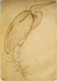 Pisanello, a Heron, mid 15C. Codex Vallardi 2450, Louvre, Paris.