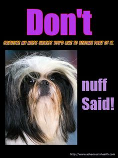 Don't criticize meme, dog with an attitude! #meme #funny #dog #quotes