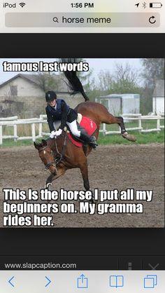 Haha! It's a husband horse