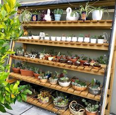 Succulent Arrangements, Planting Succulents, Garden Plants, Indoor Plants, Planting Flowers, Garden Shelves, Plant Shelves, Garden Furniture Sale, Small Courtyard Gardens