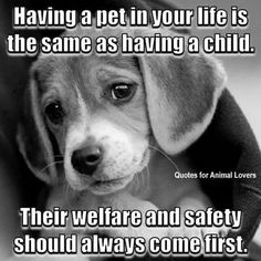 Companion Pets of Cleveland. likes · talking about this. All Volunteer, Foster Home Based Animals And Pets, Baby Animals, Cute Animals, Dog Quotes, Animal Quotes, Animal Humor, Animal Memes, I Love Dogs, Cute Dogs