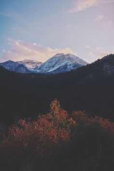 free-wilderness:  our-sorrows