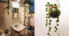 Ideal fürs Bad: 12 Pflanzen, die kein Licht brauchen.